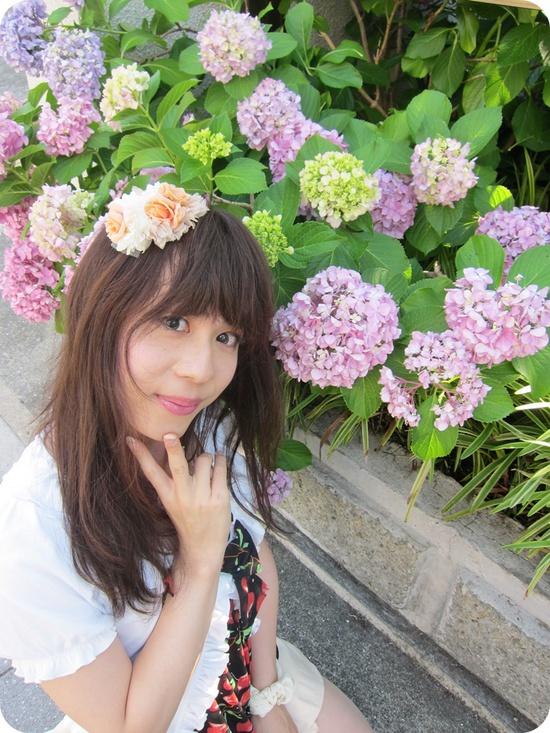 201606ajisai31.jpg